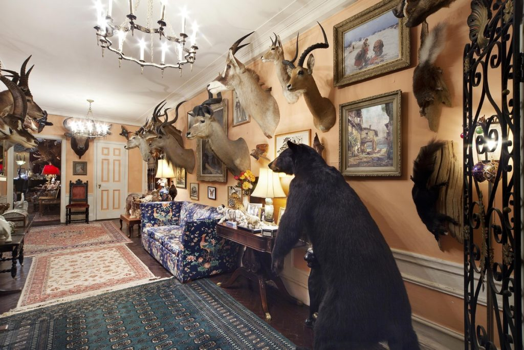 Taxidermy House